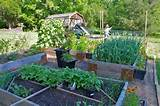 you have to see veggie garden raised beds on craftsy