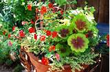 Ideas All In One Home Ideas Unique Container Gardening Ideas The Best ...