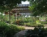 Garten mit Schatten Pflanzen – Rundblättrige Baumwürger (Celastrus ...