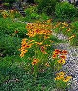 Gardens Ideas, Landscapes Ideas, Gardens Walkways, Wildflowers ...