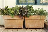 garden ideas to grow organic fruits and vegetables in a small space