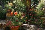 the day of the east bay garden conservancy s open gardens start at