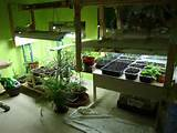 ... Indoor Gardens On Garden With Indoor Garden Now (February 2012) Ideas