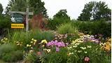 ... Perennial Flower Gardens, Gardening Tips, Gardening Advice, Gardening