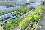 community garden tips small garden big ideas pinterest