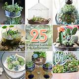 ... collection of 25 ideas for creative succulent gardens and terrariums