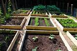 Raised Bed Vegetable Gardening : Step by Step