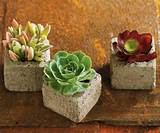 succulent cube garden the green head