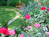 Double Knock Out Rose and Pink Knock Out Roses in one of my Landscapes