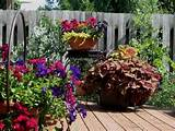 ... > Container Gardening > Container Garden Flowers Full Sun Ideas