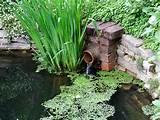 brick-pond