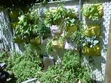 vertical garden shark tank vertical garden ideas - fastaanytimelock ...