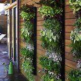 Vertical Gardening Ideas : Vertical Gardening Ideas With Wall Of Wood
