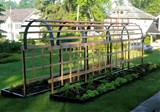 Vertical Vegetable Garden Trellis Vertical Vegetable Garden Trellis
