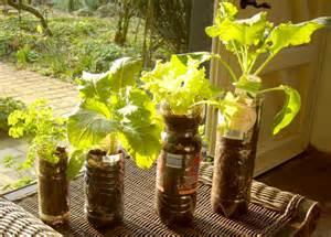 garden pots|container gardening|home garden