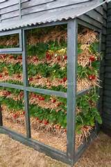 gardening vertical garden growing strawberries strawberries grown