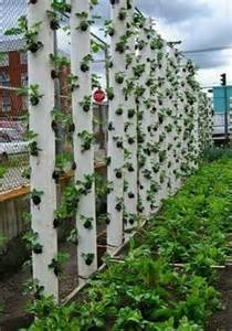 ... Gardens, Vertical Gardens, Pvc Pipe, Strawberries Towers, Hanging