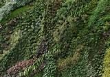 rudernow vertical gardens
