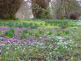 russborough house co wicklow spring bulbs creating a beautiful and