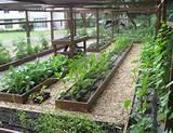 vegetable garden design ideas pictures png hi res 720p hd