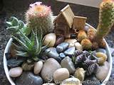 Indoor Garden Gallery of Tabletop Container Garden - Cactus Garden ...