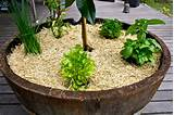 herb wine barrel garden wine barrel gardens
