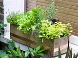 by hgtvgardens crew rustic window box filled with cottage herbs