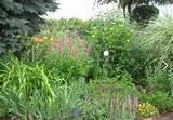 my garden cottage garden yard ideas pinterest