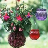 Container Gardening Ideas | Gardening Ideas