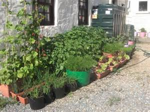 container gardening container vegetable garden plans ideas