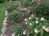rose garden ideas design inspirational rose back garden ideas rose
