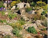 wild ginger farm rock garden ideas gardening pinterest