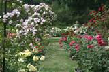 Rose Garden Ideas, Oakland Rose Garden « Living In The O