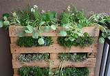 DIY ideas – How to build a vertical herb garden from a wooden pallet