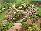 Rockery plants Rock garden ideasBerm, Backyards