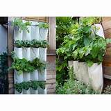 Gardening on fence- space saver | Gardening | Pinterest