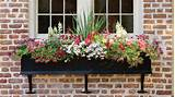 Container Gardening - Southern Living