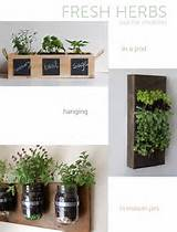 easy indoor plants for urban gardening ideas