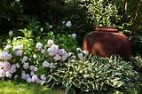 ... ideas, Hydrangea Madame Emile Mouillere, Hosta Patriot, Shade gardens
