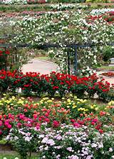 TX Rose Garden.Gardens Ideas, Rose Gardens, East Texas, Pretty Gardens ...