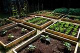 cheap raised vegetable garden ideas