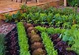 vegetable garden ideas patio design ideas how to choose vegetable ...