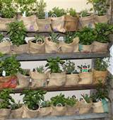 An easy way to dress up a plant pot. Just wrap with a burlap sack.