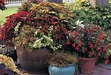 Container Gardens, When Properly Planned, Make Patio Sets Look Their ...