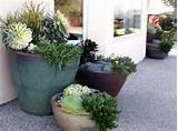 succulent pots plant sprout grow pinterest