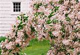 13 great shrubs for spring color