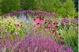 Fabulous Perennial Meadow Planting Idea