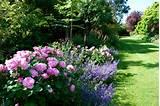 garden designer. Garden designer Kent. Rose gardens. Country garden ...