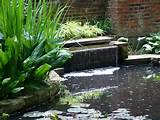 water pond water lilies large area nice brick wall garden water ...