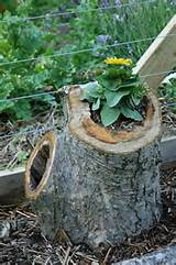 garden garden fence garden planters tree stump planter via